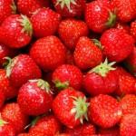 strawberries_Tina Phillips