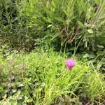 gräslök salvia oregano örter
