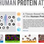 The human protein atlas Skärmavbild 2014-11-08 kl. 10.14.53
