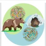 Bear microbiome Skärmavbild 2016-02-13 kl. 17.18.30