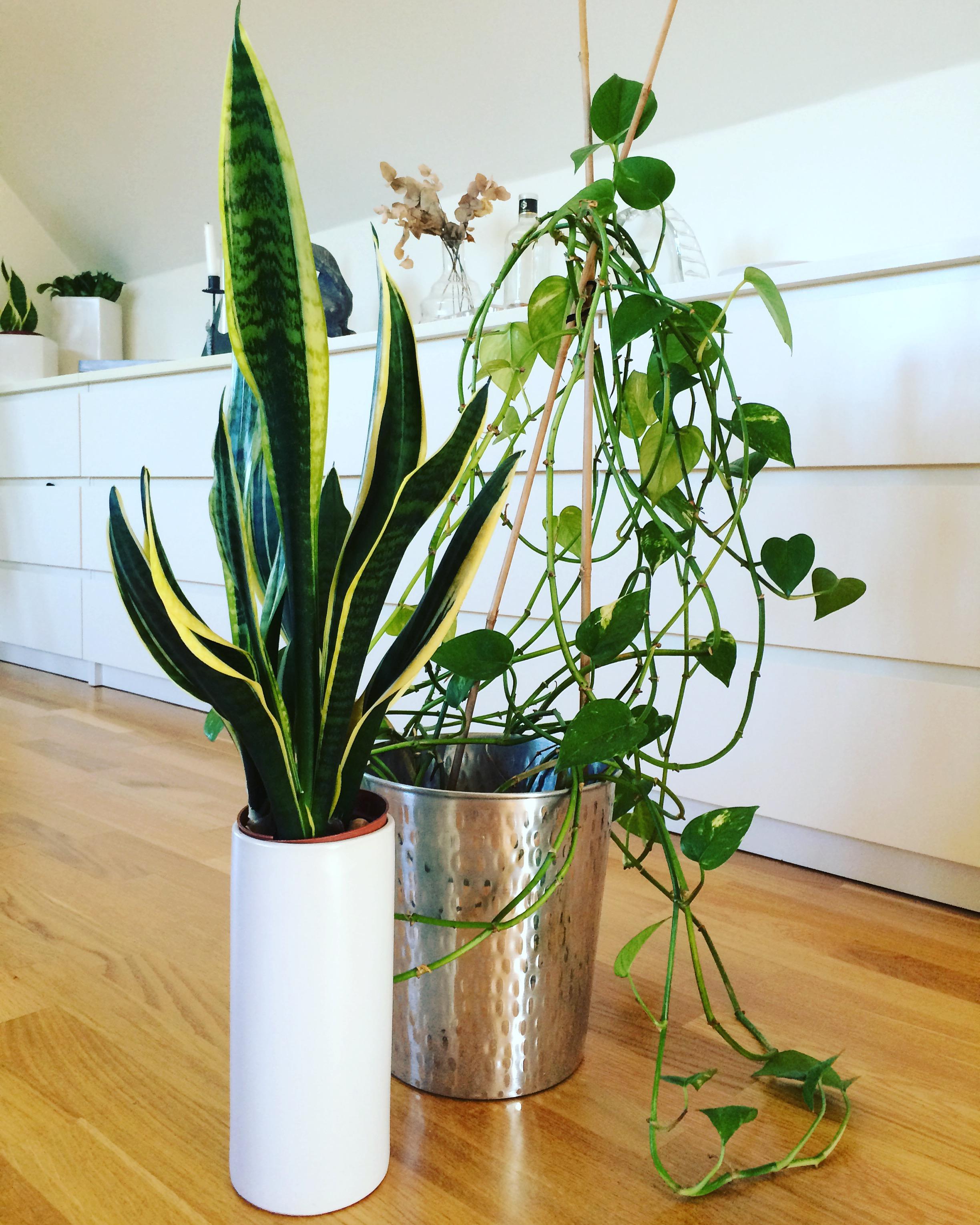 billiga växter online