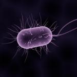 Världssamarbete mot resistenta bakterier