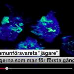Makrofager – en viktig del i ditt immunförsvar