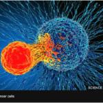 Nyupptäckt behandling mot cancer med enorm potential