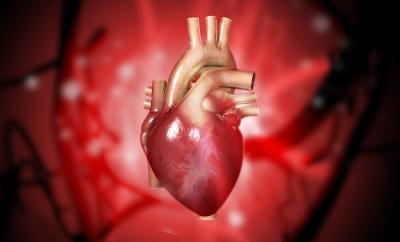Brusten hjärna (stress) ger brustet hjärta