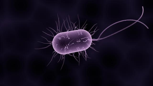 Studie: Nyttiga tarmbakterier från djur