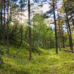 Studie: Använd naturens ljud mot stress och oro